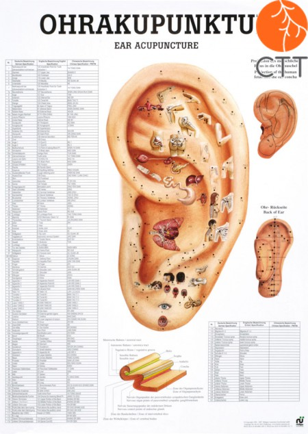 Poster (Anatomical Chart) Ear