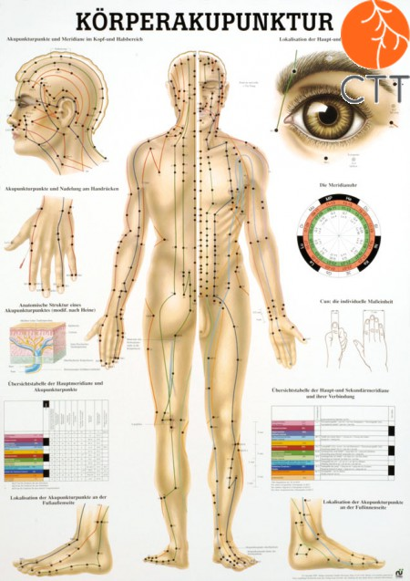 Poster (Anatomical Chart) Body acupuncture Body