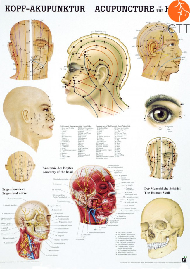 Poster (Anatomic - Your Swiss complementary partner for Traditional ...