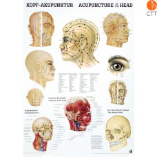 Poster (Anatomical Chart) Head
