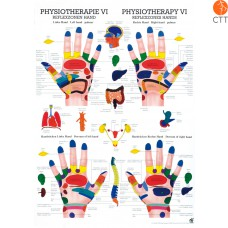 Poster (Anatomical Chart) Physiotherapy VI