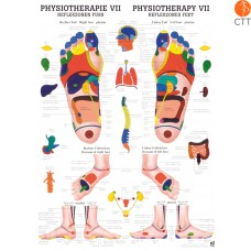 Poster (Anatomical Chart) Physiotherapy VII