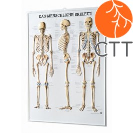 Relieftafel Skelett, 54 x 74cm, 3-D-Relief-Poster