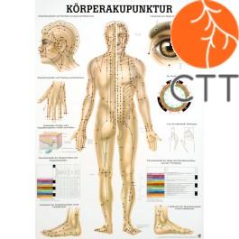 Lehrtafel Körperakupunktur Körper