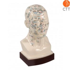 Profi-Kopfmodell Hartplastik