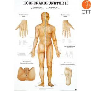 Lehrtafel Körperakupunktur II