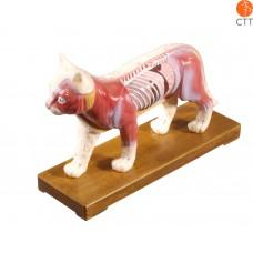 Professionelles Modell Katze mit Akupunkturpunkten, Hartplastik