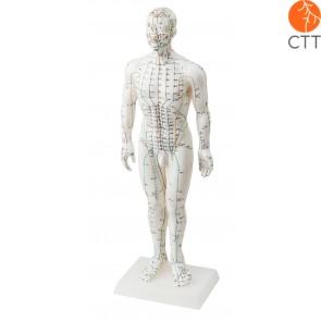 Poupée du corps humain entier 50 en plastique semi-dure