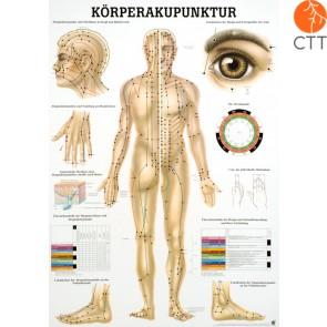 Acupuncture du Corps planche d´enseignement, 50 x 70 cm