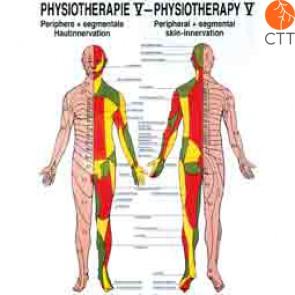Planche d'enseignement Physiothérapie V chez CTT votre partenaire pour la medecine complementaire depuis 1998