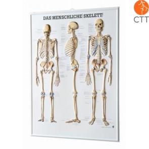 Poster rélief squelette, 54 x 74cm, poster en 3-D, en allemand