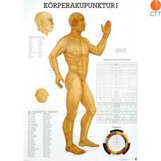 Acupuncture du Corps I, 70 x 100 cm Planche d´enseignement plastifié