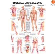 Drainage lymphatique manuel, 70  x 100 cm, Planche d´enseignement plastifié, en